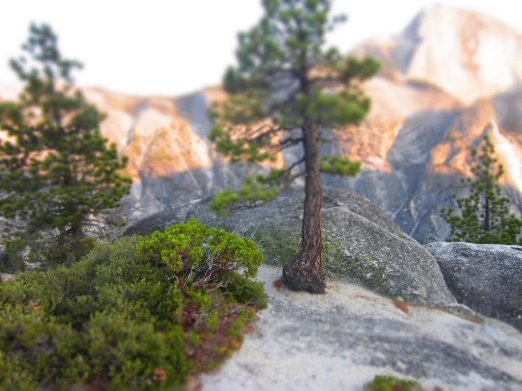 Tilt Shift Yosemite